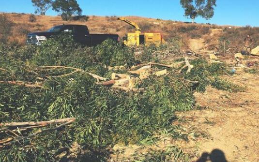 Tree service Santa Ana, CA
