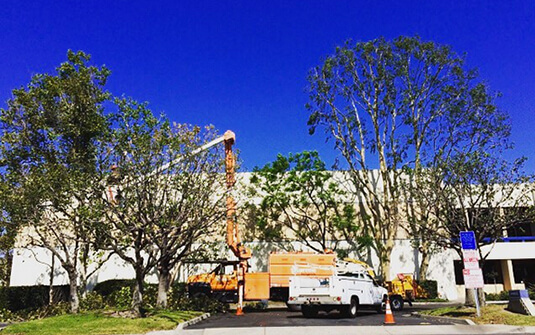 Commercial tree trimming truck at office building in Orange County