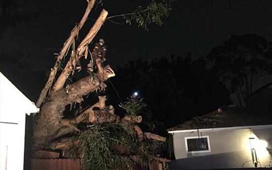 Emergency Fallen Tree in Back Yard at Night
