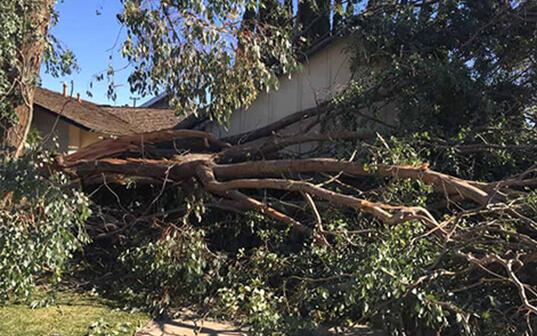 Emergency Fallen Tree in Residential Yard
