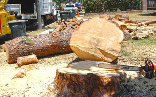 Tree Service Orange County
