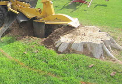 Stump removal santa ana ca