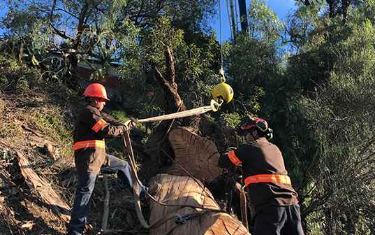 supreme tree experts removing large tree from hillside in santa ana