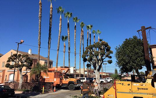 Tree service California
