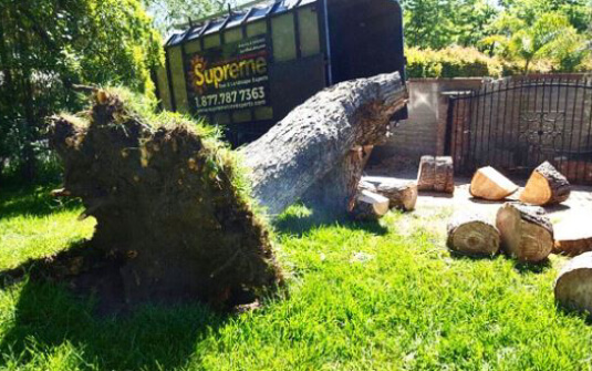 supreme tree experts truck behind removed tree stump in southern california