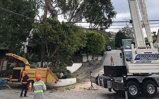 tree removal company at work in an orange county neighborhood