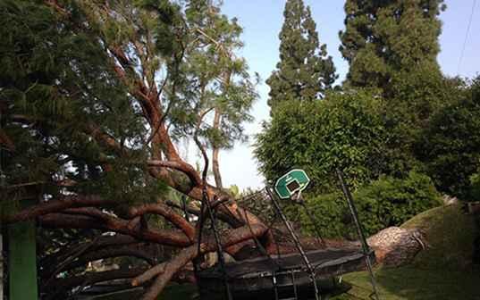 large tree fallen on trampoline in california backyard