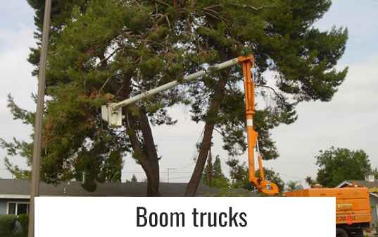 Orange boom truck trimming large tree branches