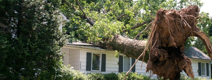 dead tree fallen on house in southern california